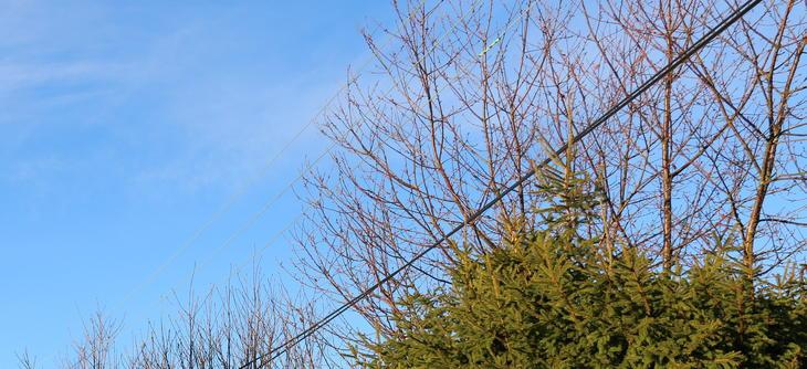 Trær som vokser opp i lavspent blankstrekk