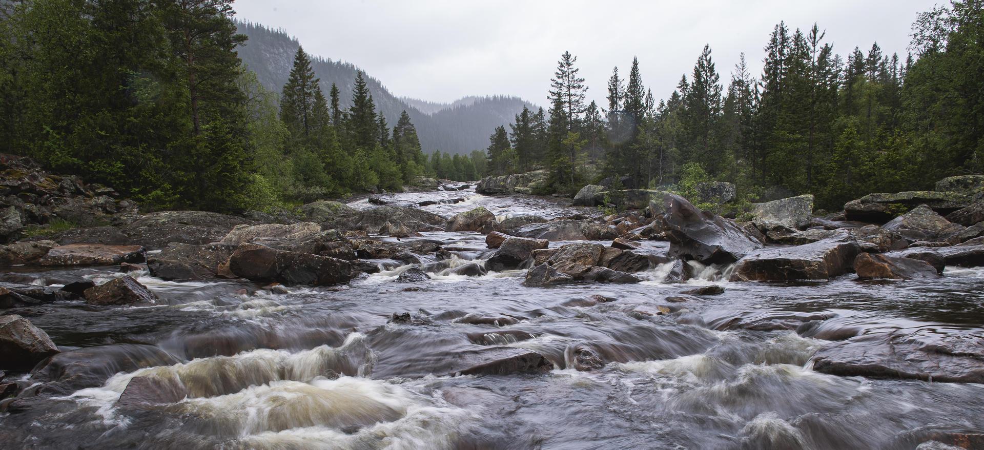 Rennende vann og skog